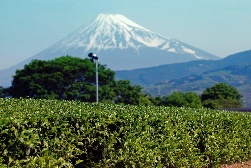 静岡の農業婚活イベント、パーティー、結婚相談所一覧まとめ
