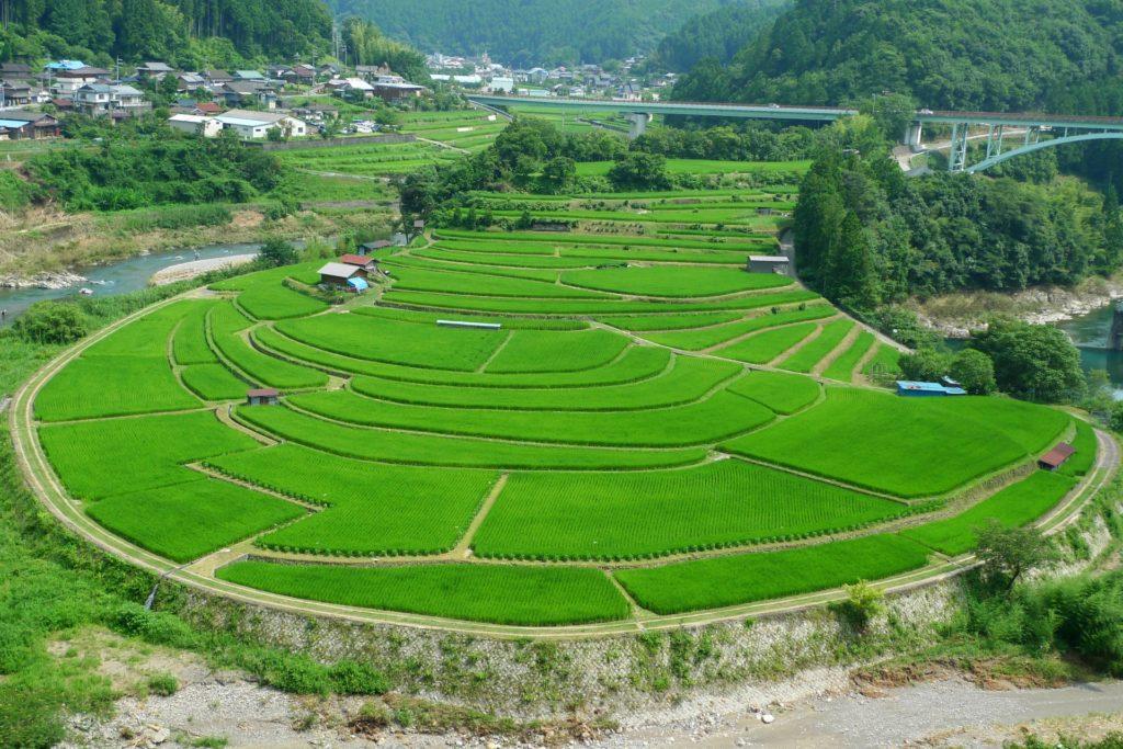 和歌山の農業婚活イベント、パーティー、結婚相談所一覧まとめ