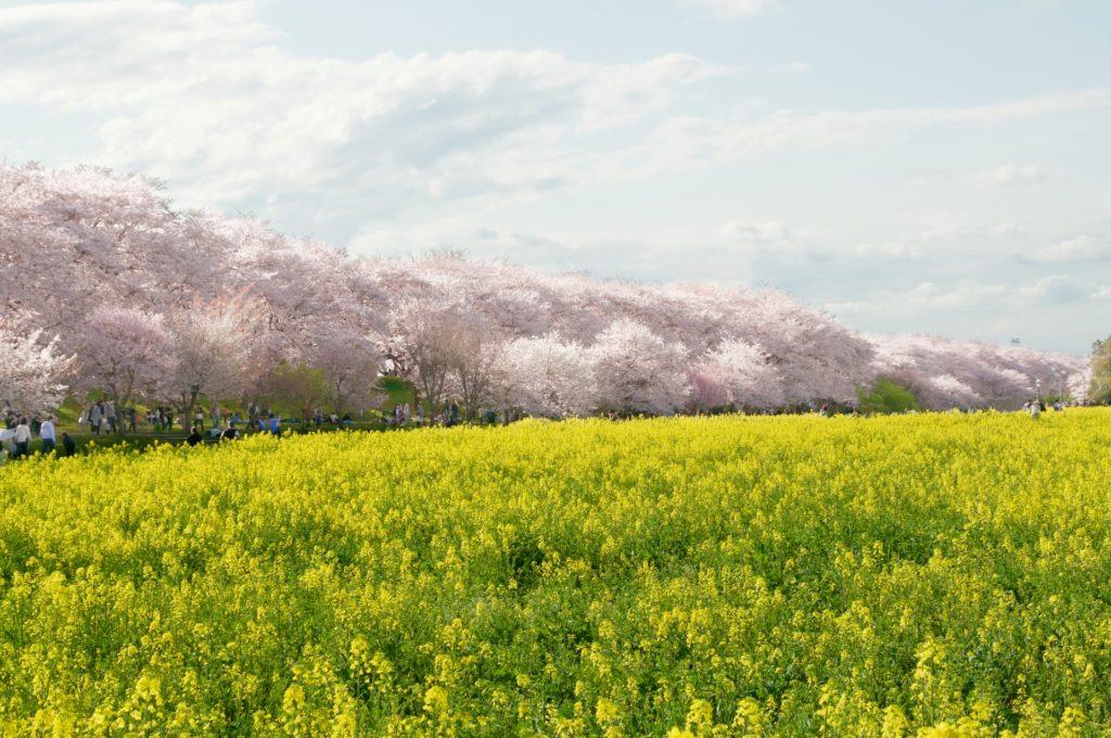 埼玉県の農業婚活イベント、パーティー、結婚相談所一覧まとめ